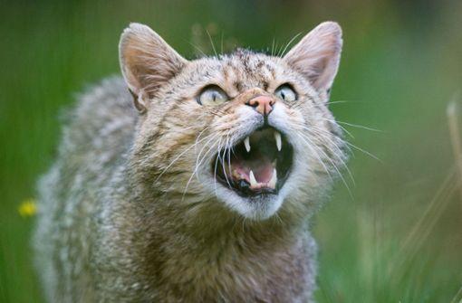 Frau mehrmals attackiert – Polizei rätselt weiter um Katzen-Attacke
