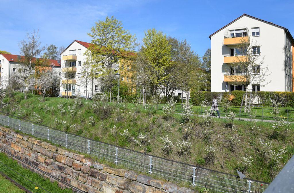 Am Ehrlichweg gibt es Platz für Gärten und Bäume. Die  Anwohner fürchten, dass Neubauten den grünen Charakter des Quartiers zerstören. Foto: Alexandra Kratz