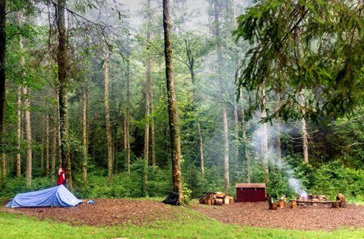 Ein Hauch von Wildnis im Schwarzwald
