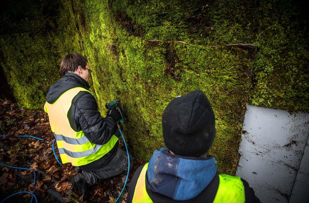 Frisches Moos in sattem Grün ersetzt die abgestorbenen Bereiche. Foto: Lichtgut/Leif Piechowski