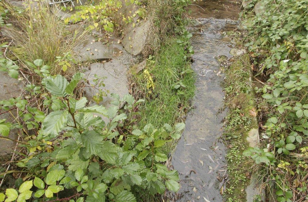 2,4 Kilometer ist der Burggraben lang – und fließt komplett auf Beton. Foto: factum/Bach
