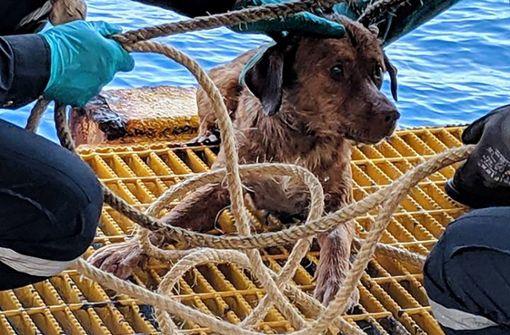 Mitarbeiter von Ölplattform retten Hund aus dem Meer