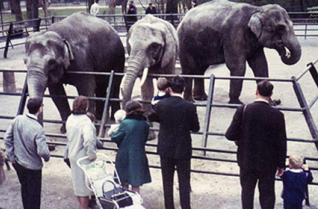 Sie war eines der ersten Wilhelma-Tiere überhaupt: Elefantendame Vilja kam schon 1952 nach Stuttgart und lebte dort bis zu ihrem Tod 2010. Foto: Wilhelma