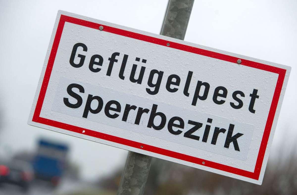 Die Geflügelpest war in einem Betrieb in Herrenberg ausgebrochen. (Symbolbild) Foto: dpa/Stefan Sauer