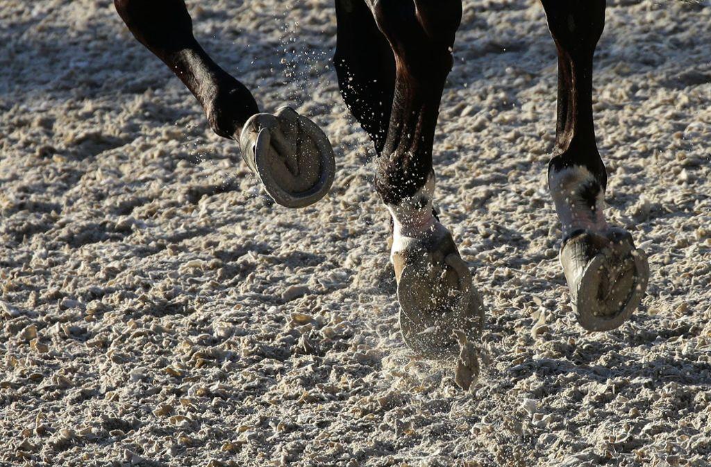 Ein Mädchen ist im Emsland von Pferden überrannt worden (Symbolbild). Foto: Pressefoto Baumann