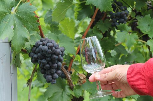 Weinprobe mit Blick auf Stuttgarts Kessel