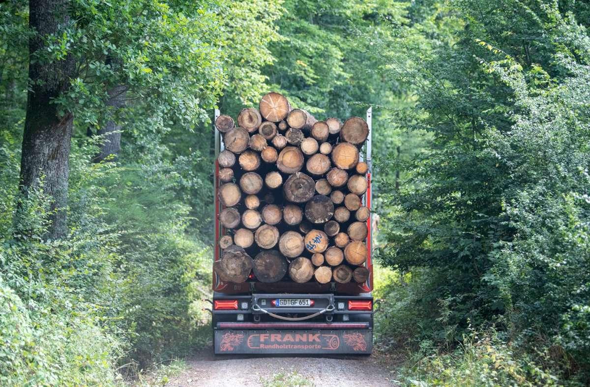 Holztransporte wie dieser sind extrem schwer und beschädigen auf Dauer Straßen. Foto: dpa/Sebastian Gollnow