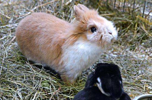 Kaninchen gehören nicht ins Osternest