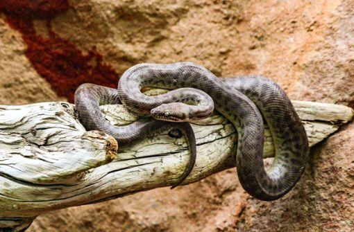 Hasen, Schlangen und der Skorpion im Marmeladenglas