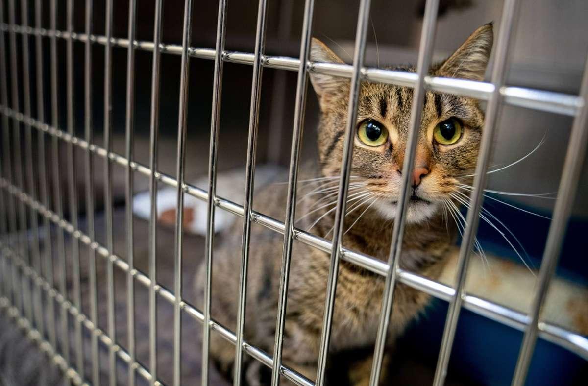 Eine ausgesetzte Katze sitzt in ihrem Käfig im Tierheim: Viele Tierheime verhängen vor Weihnachten nach einem Corona-Jahr mit deutlich erhöhter Nachfrage einen Vermittlungsstopp. Foto: Kay Nietfeld/dpa
