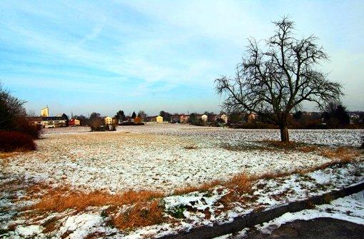 Die Wiesen am Stammheimer Ostrand werden Bauland, das hat der Gemeinderat beschlossen. Foto: Chris Lederer