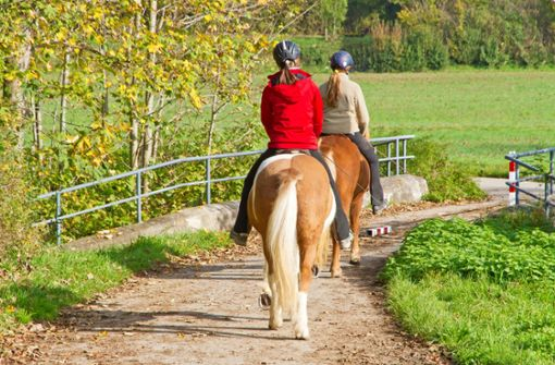 Auto gegen Pferd: Reiterin verletzt
