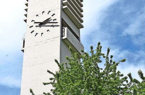 Mauersegler können in luftiger Höhe nisten