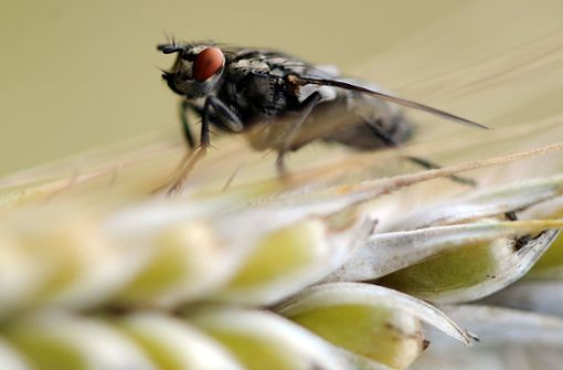 Fliege im Auge führt zu Unfall mit fünf Autos