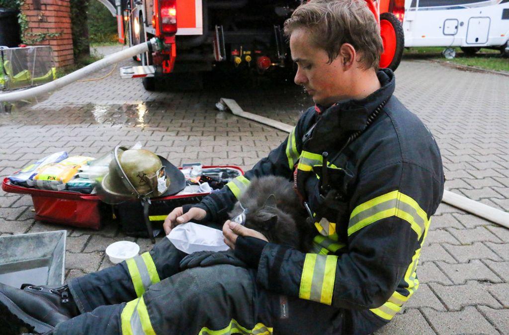 Ein Feuerwehrmann versorgt eine Katze mit Sauerstoff. Foto: Jens Pusch