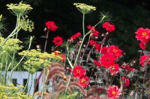 Blumen  werden jetzt neben Gemüse gepflanzt