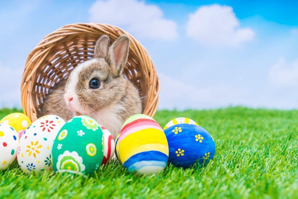 Warum bringt der Osterhase die Ostereier? Foto: jannoon028/Shutterstock
