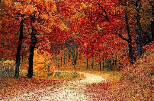 Zu keiner Jahreszeit ist der Wald schöner - die bunte Blätterpracht lädt zu ausgedehnten Spaziergängen ein.