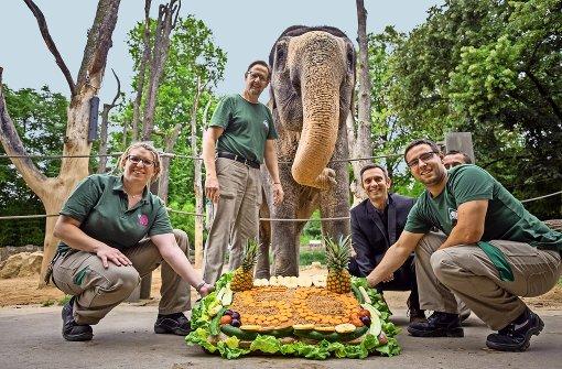 Bei Hasen sieht die Elefantendame rot