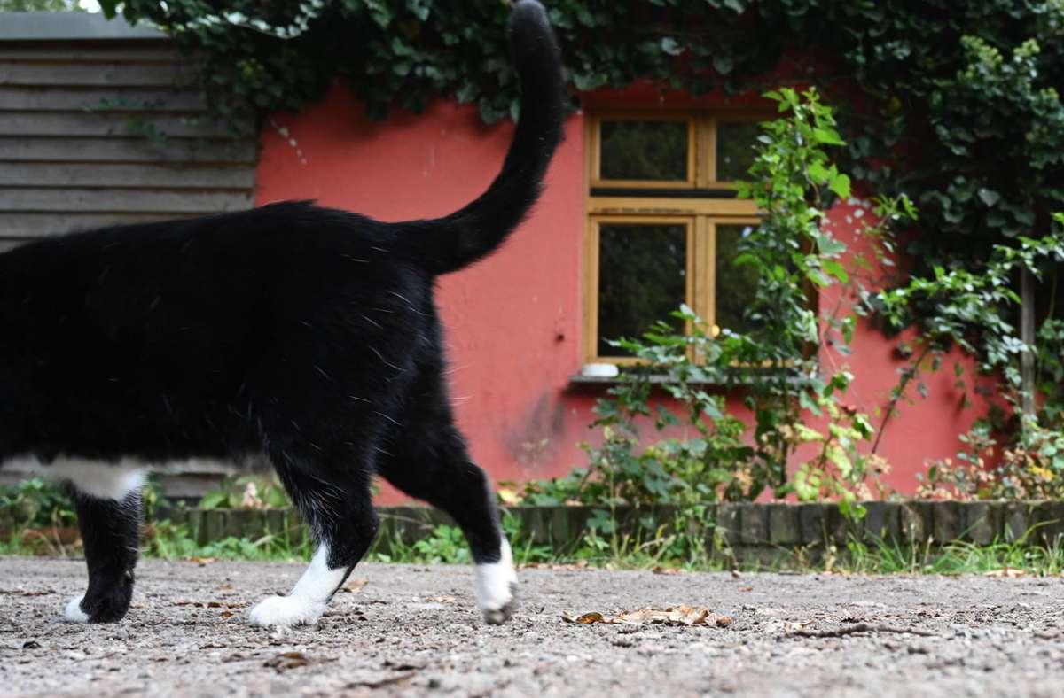 Die Katzen wurden offenbar enthauptet (Symbolbild). Foto: imago images/Petra Schneider-Schmelzer