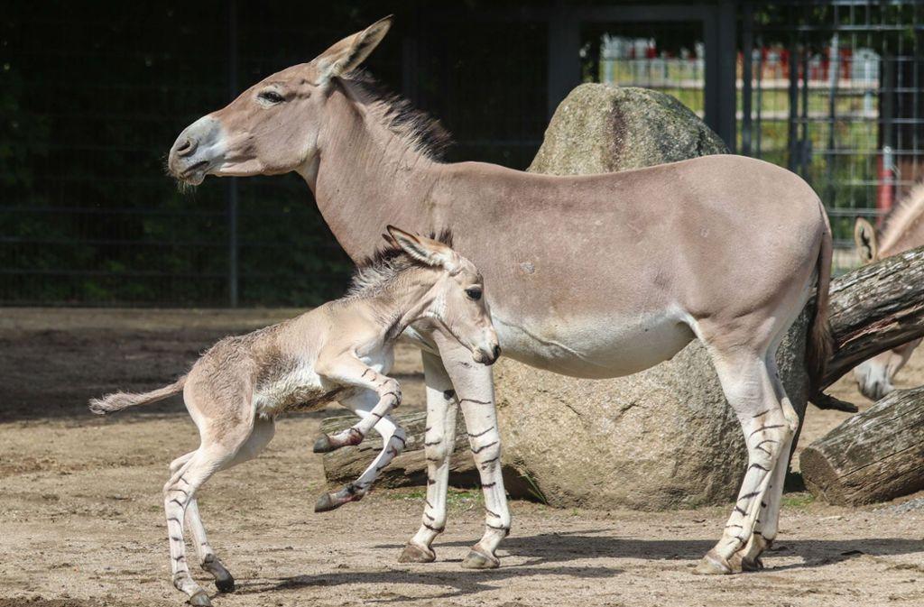 Mutter Sarina mit ihrem noch namenlosen Junge. Foto: Jana Müller