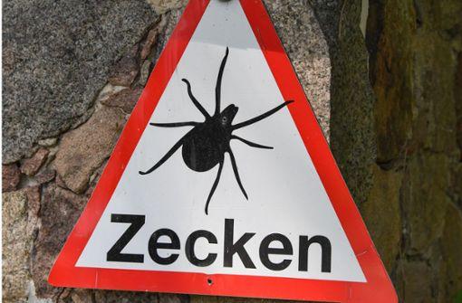 So ist die Zecken-Lage in Baden-Württemberg