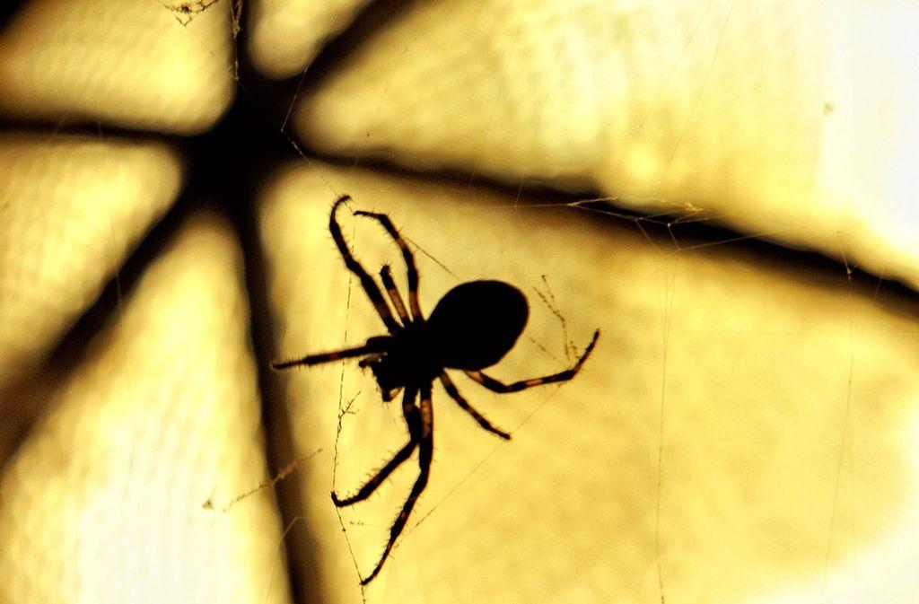 Eine Spinne im Auto hat eine Frau auf der A6 in Panik versetzt (Symbolbild). Foto: dpa