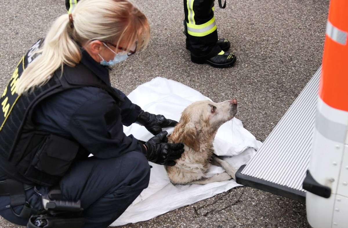 Ein Hund wird nach seiner Rettung von Einsatzkräften   betreut. Foto: 7aktuell.de/Kevin Lermer/7aktuell.de | Kevin Lermer