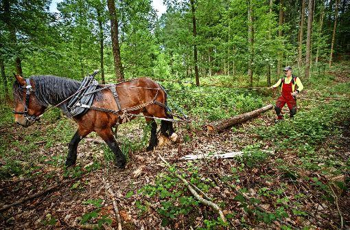 Waldpflege komplett  in Hufarbeit