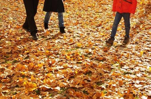 Herbstblätter, letzte Lieferung