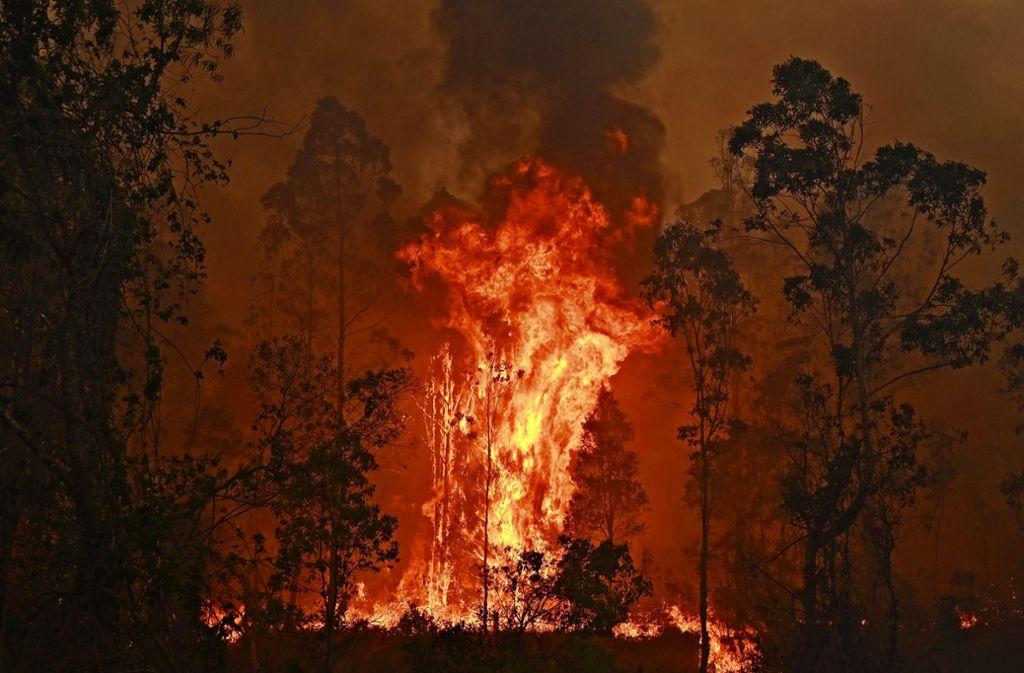In der Gemeinde Bobin in New South Wales, nördlich von Sydney, wüten die Flammen außer Kontrolle. Foto: AFP/Peter Parks
