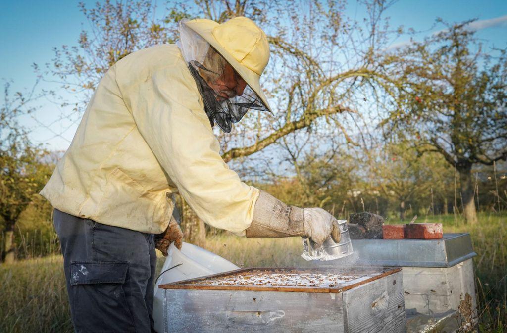 Berufsimker Eckard Berlin bei der Arbeit mit seinen Bienen. Foto: /Edgar Layher