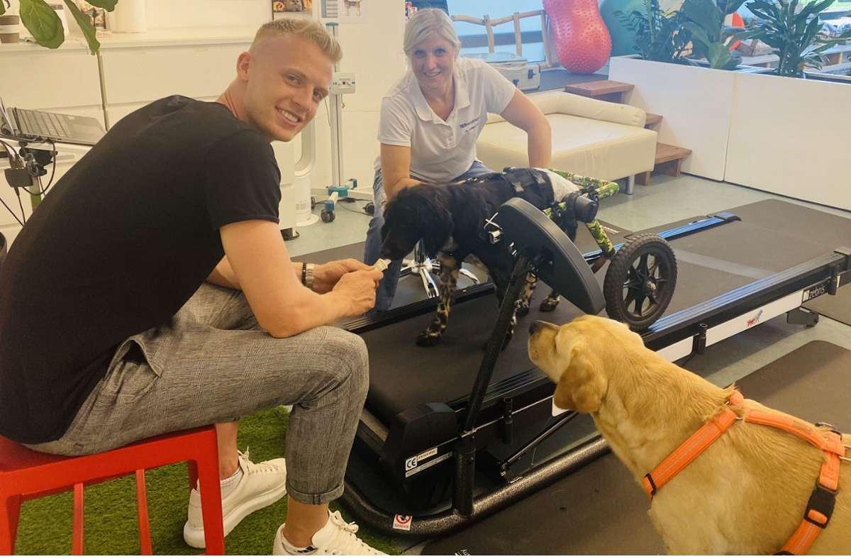 Der frühere VfB-Profi Timo Baumgartl (heute   1. FC Union Berlin) in der Tierphysiotherapiepraxis von Kirsten  Häusler mit seinem Labrador  Jimmy und dem verletzten Lucky auf dem Laufband. Foto: Göthel