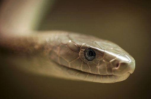 140000 Tote durch Schlangenbisse