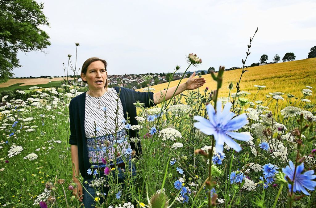 Maria Müller-Lindenlauf betont den Wert von Ackerrandstreifen mit  Wildkräutern als Lebensraum für Wildbienen. Foto: Ines Rudel