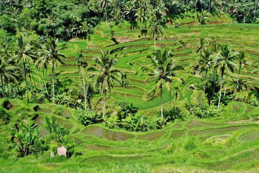 Mai Chau – ein Radelparadies zwischen Reisfeldern und Palmen.