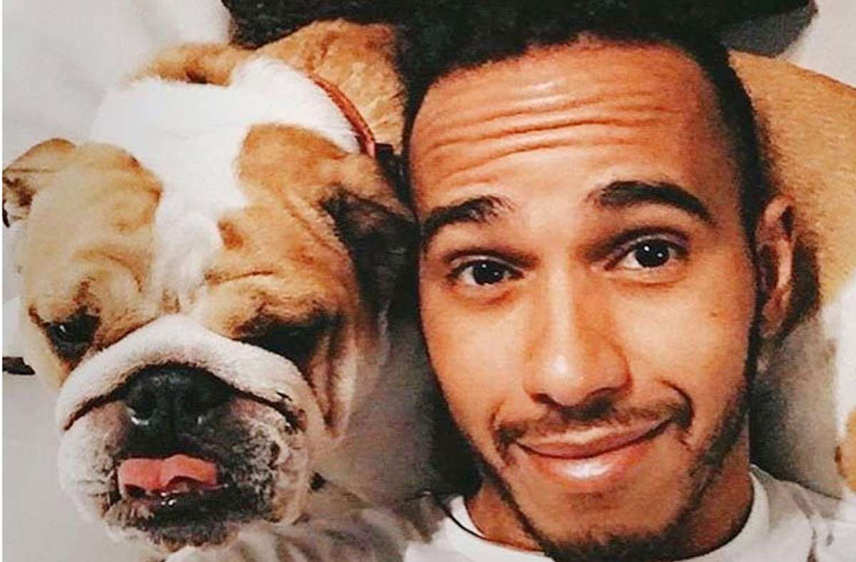 Ein Herz und eine Seele: Lewis Hamilton und Roscoe Foto: Instagram/@roscoelovescoco