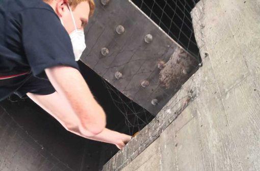 Tauben unter Bahnbrücke gefangen