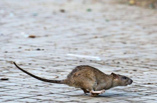Esslinger Straße ist Fellbacher Ratten-Hotspot
