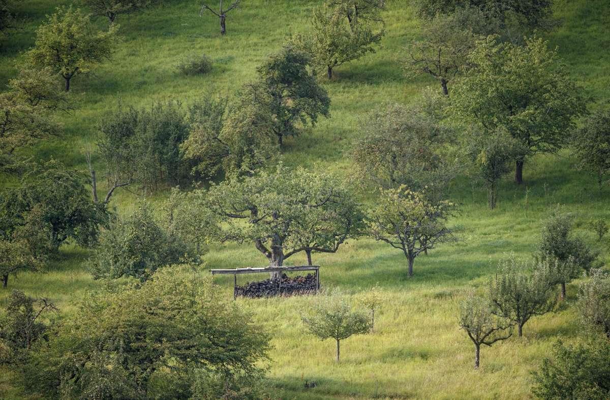 Streuobstwiesen in Strümpfelbach – Holz lagern auf einem Grundstück ist erlaubt.  Foto Foto: Gottfried Stoppel