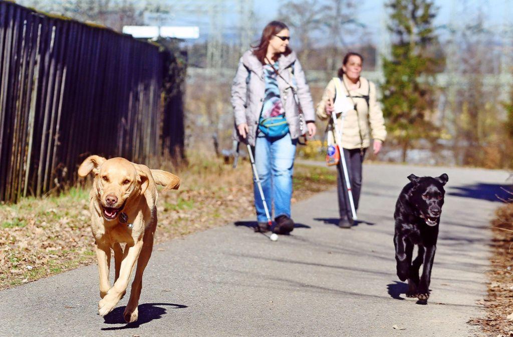 Arbeitspause: Die Blindenhunde Rover (links) und Ron genießen es,  bei der Runde entlang des Favoriteparks einfach mal frei Schnauze loszupreschen Foto: factum/
