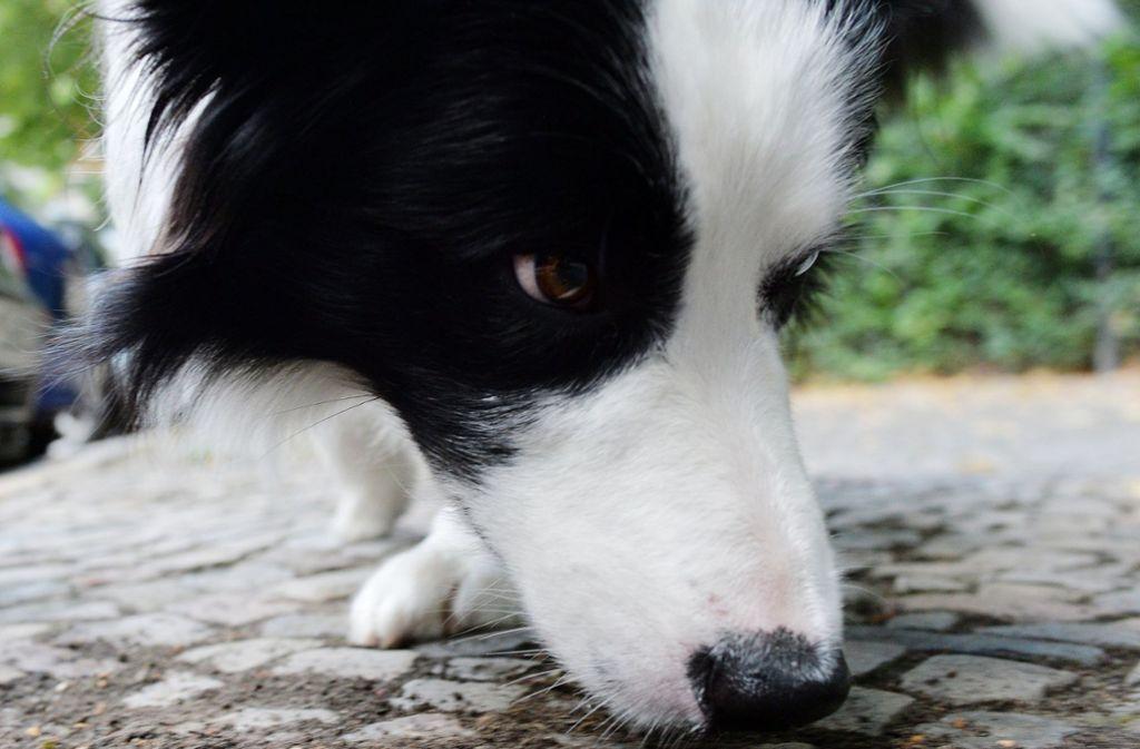 Ein Unbekannter hat an Heiligabend einen Hund angezündet (Symbolbild). Foto: dpa