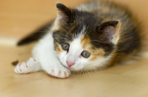 Tierquäler trennt Katze Schwanz und Kopf ab