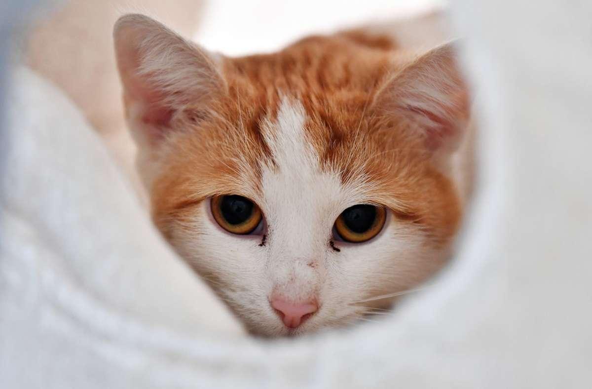 Mehrer Katzen haben wohl ihre schlafenden Besitzer gerettet. (Archivbild) Foto: dpa/Martin Schutt