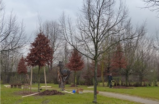 Baumgräber ergänzen die Bestattungskultur