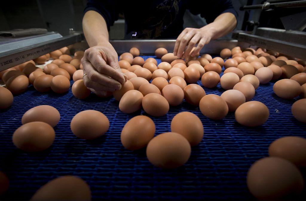 Belgische Hühnerfarmen produzierten die vergifteten Eier. Foto: dpa