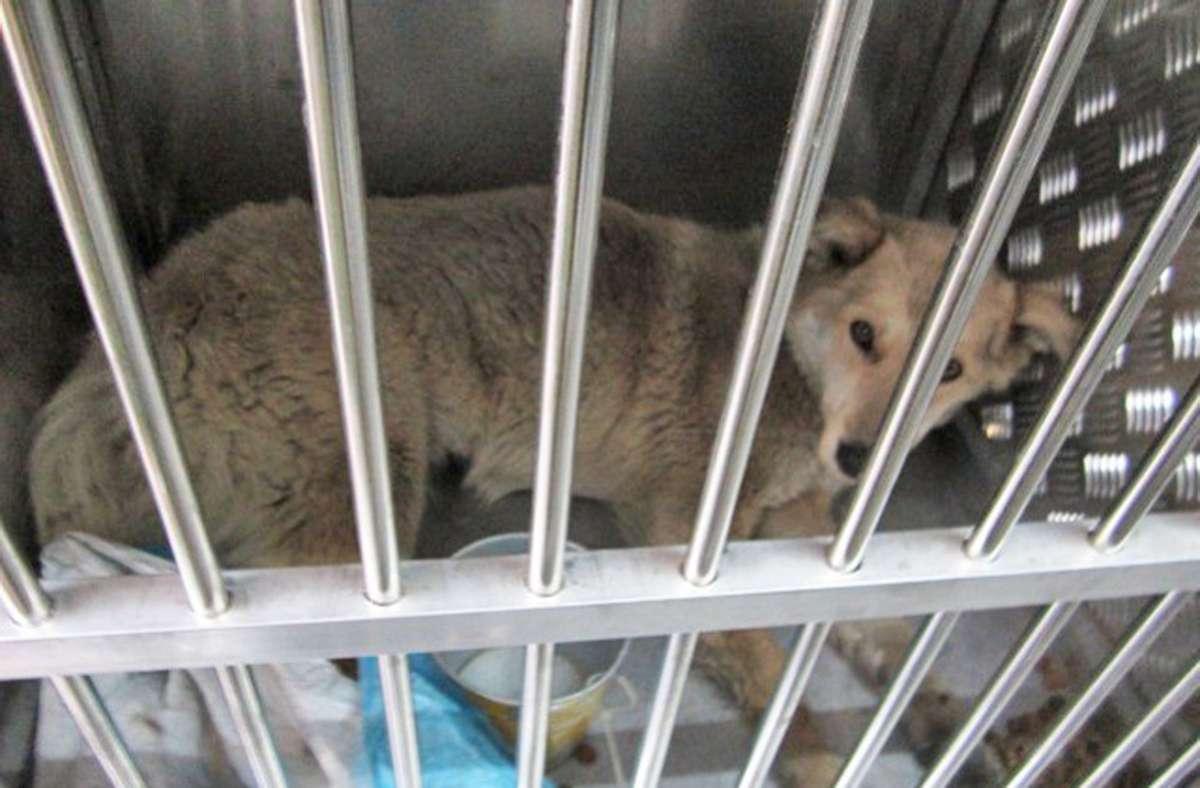 Beim illegalen Welpenhandel werden die Hunde oft unter widrigen Transportbedingungen transportiert. Foto: LRA