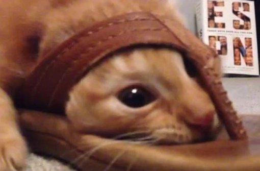 Eine Katze steckt in einem Flipflop fest