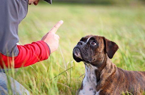Ordnungsamt nimmt Halterin den Hund weg