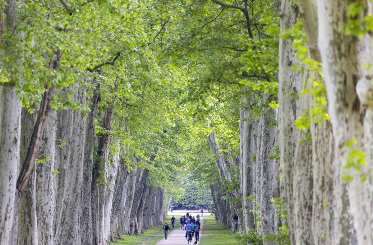 Der Schlossgarten ist einer der Orte in Stuttgart, in dem man  der Sonne entfliehen kann: Vor allem die Platanenallee spendet Besuchern viel Schatten. Foto: imago images/Arnulf Hettrich